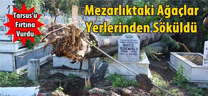 Tarsus'u fırtına vurdu, mezarlıktaki ağaçlar yıkıldı