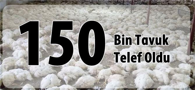 Çamlıyayla'da 150 bin tavuk telef oldu