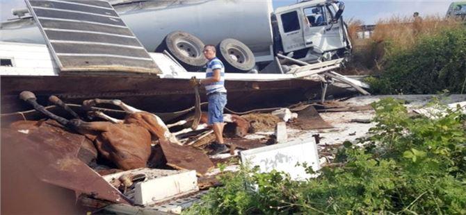 Tarsus'taki kazada at'lar telef oldu