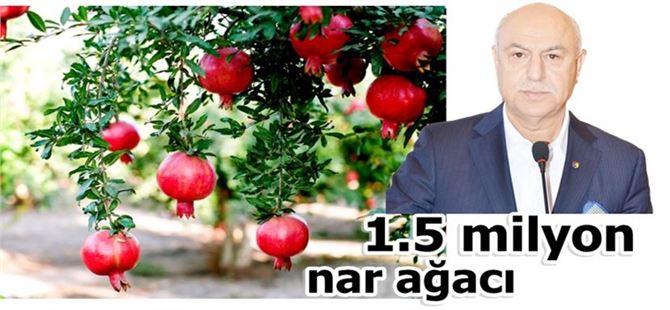 Tarsus'ta 1.5 milyon nar ağacı var