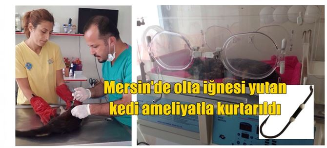 Olta iğnesi yutan kedi ameliyatla kurtarıldı