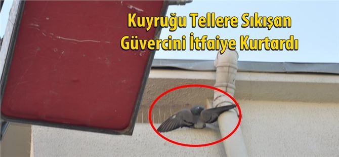 Kuyruğu Tellere Sıkışan Güvercini İtfaiye Kurtardı