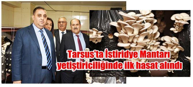 Tarsus'ta İstiridye Mantarı yetiştiriciliğinde ilk hasat alındı