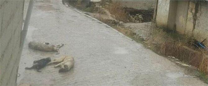 Kopan elektrik telleri köpekleri öldürdü