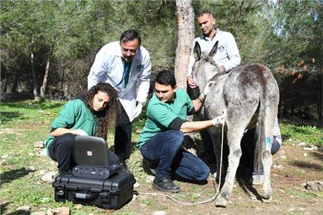 Mersin'de eşek kurtarma operasyonu