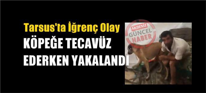 Tarsus'ta köpeğe tecavüz eden şahıs suçüstü yakalandı