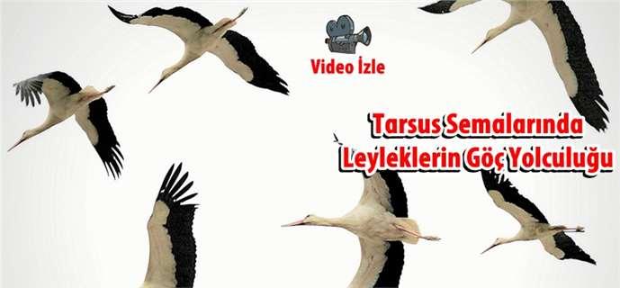 Tarsus'ta leyleklerin göç yolculuğu