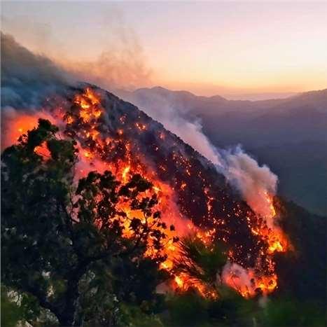 Mersin'de yaşanan orman yangınlarından fotolar