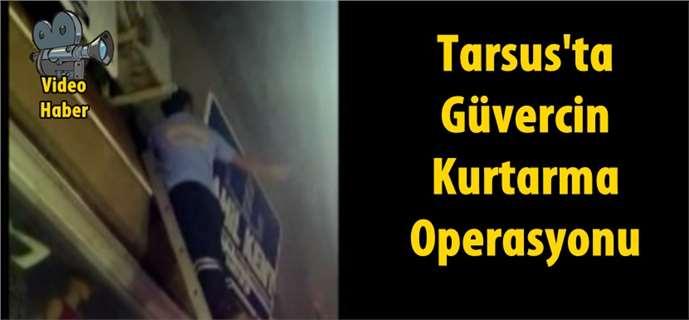 Tarsus'ta işyeri tabelası arasına sıkışan güvercini, itfaiye ekipleri kurtardı