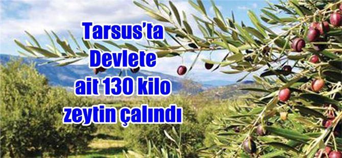 Tarsus'ta devlete ait zeytinleri çalan şahıs yakalandı