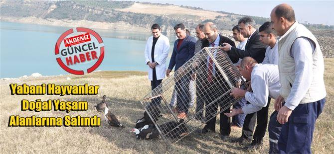 Tarsus'ta tedavi edilen yabani hayvanlar doğal yaşam alanlarına salındı