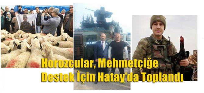 Horozcular, Mehmetçiğe Destek İçin Hatay'da Toplandı