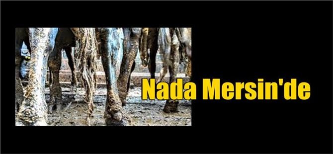 Nada Mersin'e ulaştı