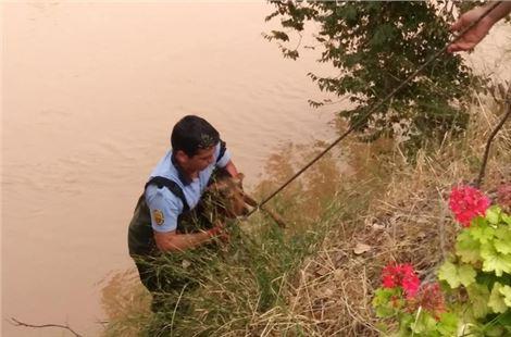 Mersin'de ırmağa düşen köpeği itfaiye kurtardı