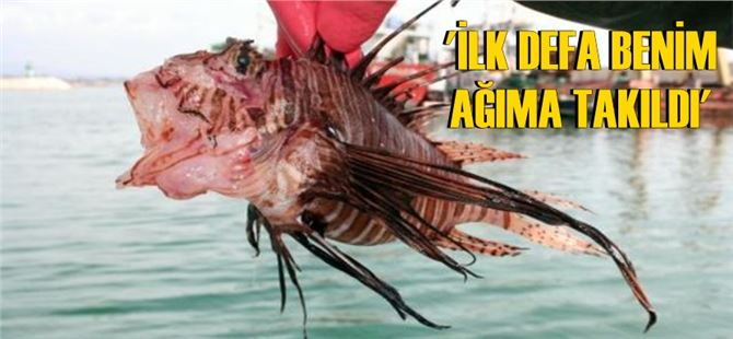 Mersin'de yakalandı, balıkçılar şaşkın