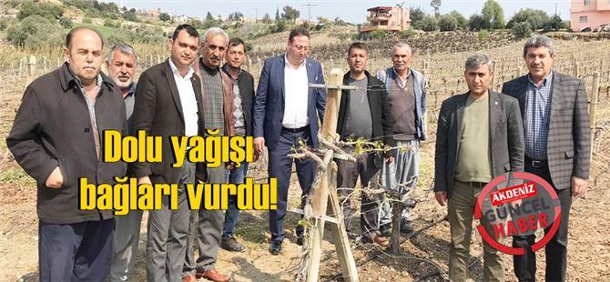Tarsus'ta dolu yağışı bağları vurdu!