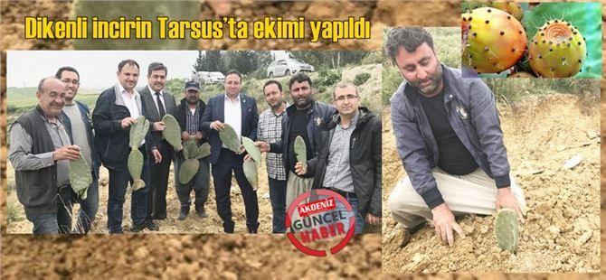 Genelde doğada kendiliğinden yetişen dikenli incirin Tarsus'ta ekimi yapıldı