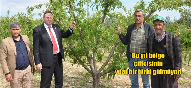 Tarsus çiftçisini bir kez daha dolu vurdu!