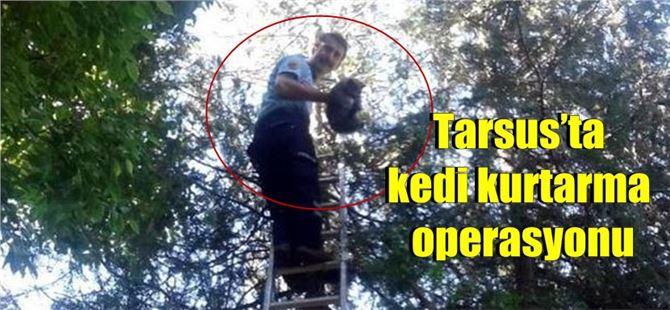 Tarsus'ta kedi kurtarma operasyonu
