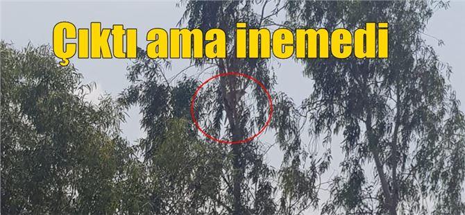Tarsus'ta 3 gündür çıktığı ağaçtan inemeyen kediyi itfaiye kurtardı
