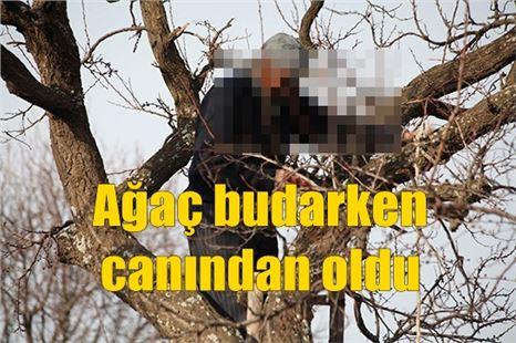 Kavak ağacını budarken akıma kapıldı; öldü