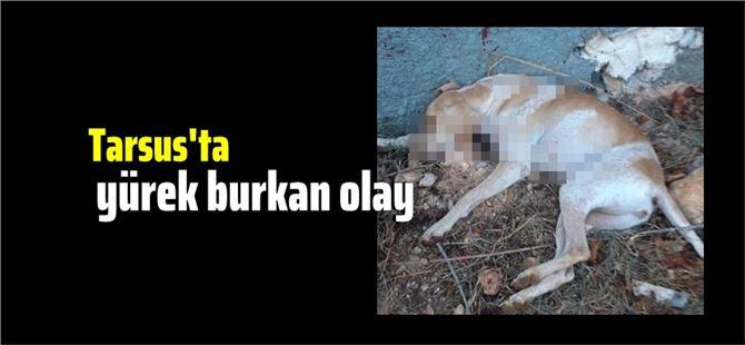 Tarsus'ta köpeği tüfekle vurarak öldürdüler!