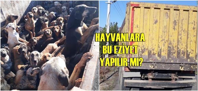 Alanya'dan Mersin'e bırakılmak üzere kamyonla 70 köpek getirildi!