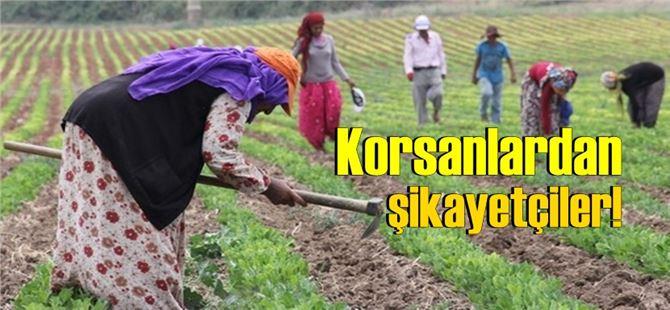 Tarsus'taki tarım işçileri korsan elcilerden şikayetçi