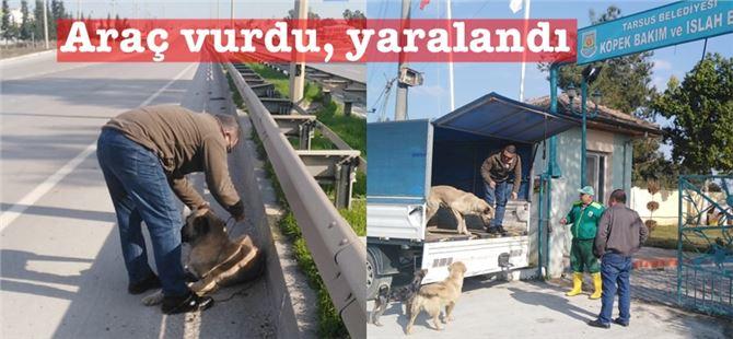 Tarsus'ta aracın vurup yaraladığı köpeğe, Büyükşehir personeli sahip çıktı