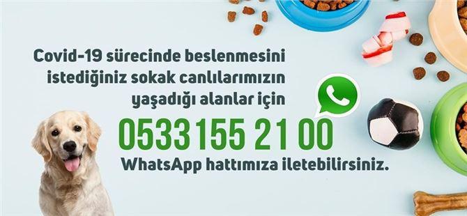 Sokak hayvanlarının beslenmesi için Tarsus'ta da Whatsapp hattı kuruldu