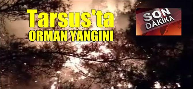Tarsus'ta Akçakocalı yakınlarında orman yangını