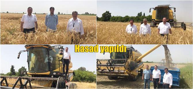 Tarsus'ta yeni arpa çeşitlerinin hasadı yapıldı