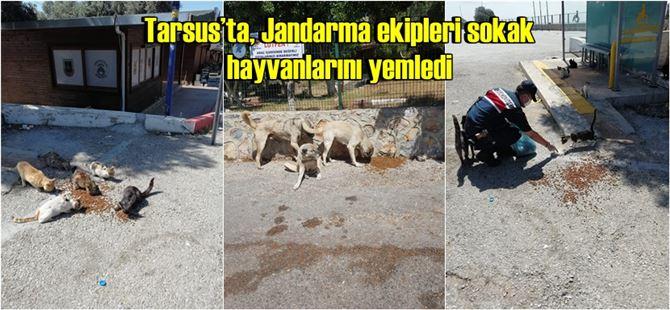 Tarsus'ta, Jandarma ekipleri sokak hayvanlarını yemledi