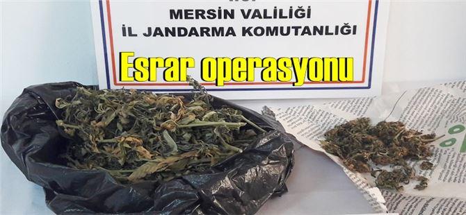Tarsus'ta Jandarma'dan esrar operasyonu