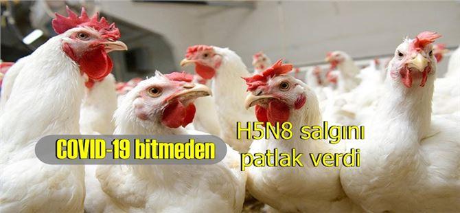 Sınır komşumuzda H5N8 salgını patlak verdi