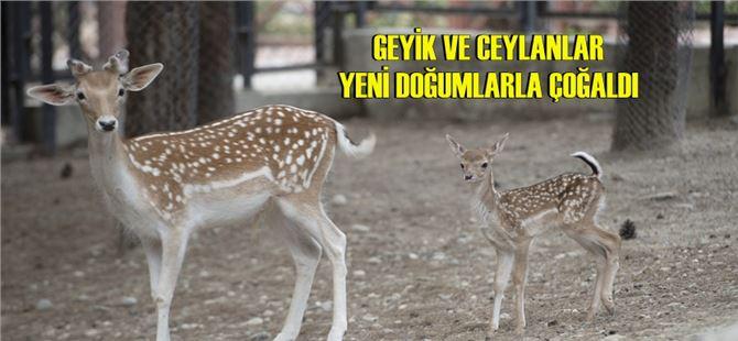 Tarsus Doğa Parkı'nın ürkek sakinleri
