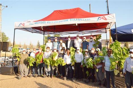 Büyükşehir Belediye Başkanı Vahap Seçer, Tarsus'ta üreticilere incir fidanı dağıttı