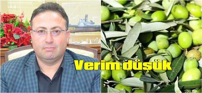 Tarsus'ta hasat dönemi başlayan zeytinde verim düşük