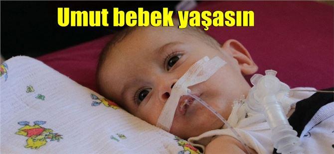 SMA hastası Umut'un hayata tutunabilmesi için yardıma ihtiyacı var