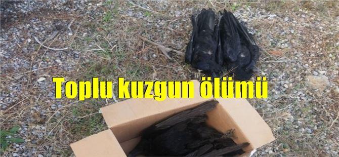 Mersin'de toplu kuzgun ölümü