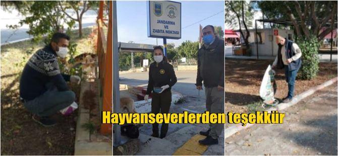 Sokağa çıkma kısıtlamasında sokak hayvanları için yem bırakıldı