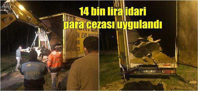Tarsus'ta belgesiz 12 büyükbaş hayvanın 10'u telef oldu