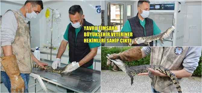 Adana'da bulunan Timsah, Tarsus Doğa Parkı'nda koruma altına alındı