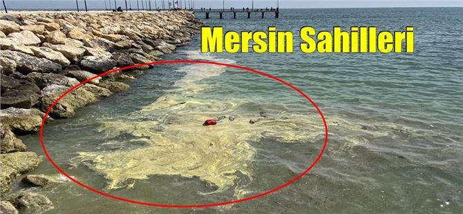 Mersin denizinde son günlerdeki renk değişimi korkutmasın!