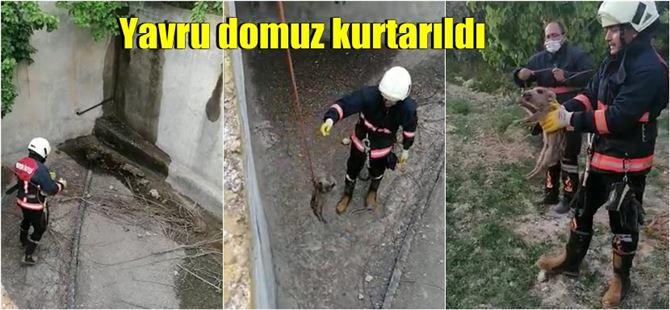 Tarsus'ta boş sulama havuzuna düşen yavru domuz itfaiye ekiplerince kurtarıldı