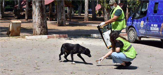 Kapanma süreci boyunca sokak hayvanlarına tam destek