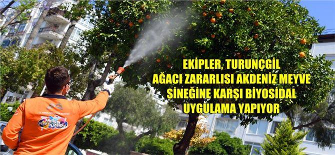 Mersin Büyükşehir, Akdeniz meyve sineği ile mücadele ediyor