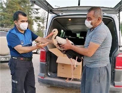 Çamlıyayla'da yaralı bulunan leylek Tarsus Doğa Parkına tedaviye alındı