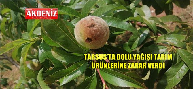 Tarsus'ta dolu yağışı tarım ürünlerine zarar verdi