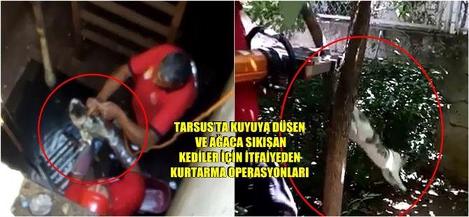 İtfaiyeden Tarsus'ta kedi kurtarma operasyonları